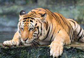 Rajasthan Wildlife Destiantions