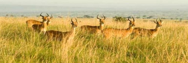 Kumbhalgarh Wildlife Sanctuary