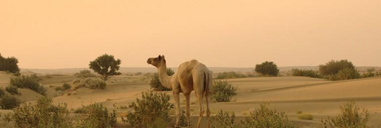 Thar Desert – The Great Indian Desert
