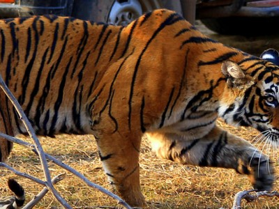 Ranthambore Tourism and Travel Guide