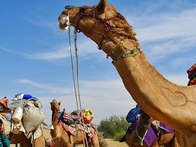 RTDC Desert Safari Package of 9 Days
