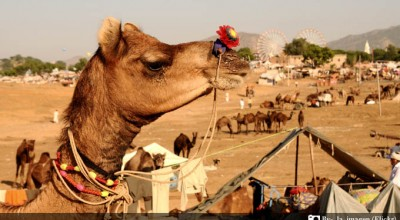 Colourful Fairs of Rajasthan Present the Glimpses of its Culture