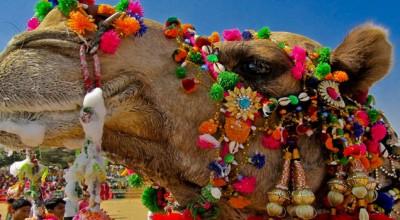 The Desert Festival : Celebrating the Captivating Culture of Rajasthan