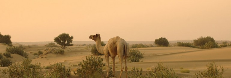 Thar Desert – The Great Indian Desert
