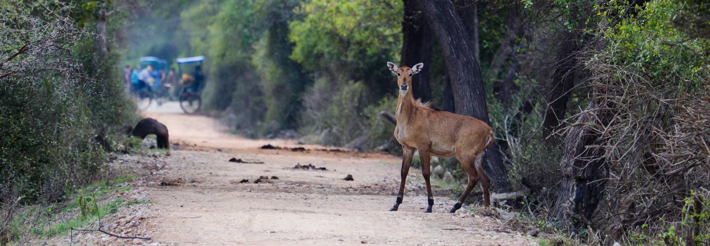 Keoladeo-Ghana-National-Park-Bharatpur