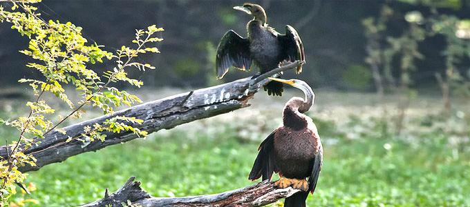 Keoladeo National Park, Bharatpur