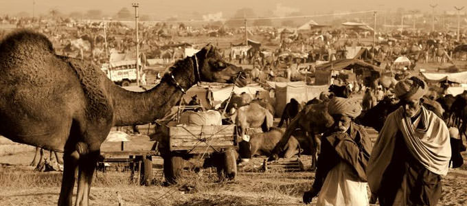 Budget Pushkar Fair Tour Package For 2 Nights