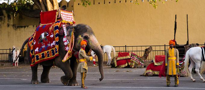 Elephant Safari In Rajasthan