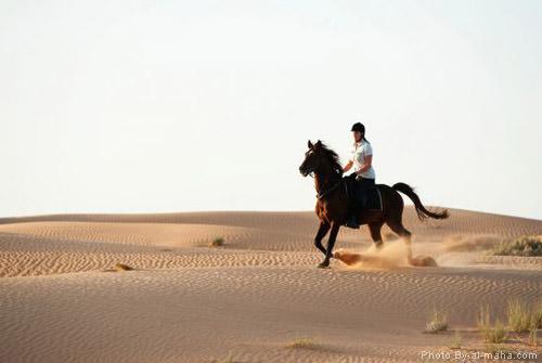 horse-safari