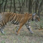 Ranthambore Nation Park