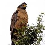 Sariska National Park Bird